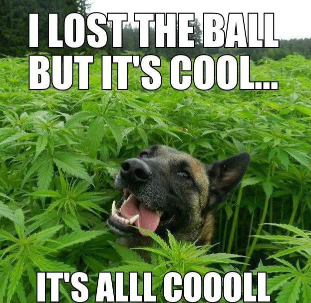 Marijuana passes meme